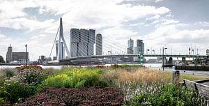 Wereldstad Rotterdam aan de maas in de zomer