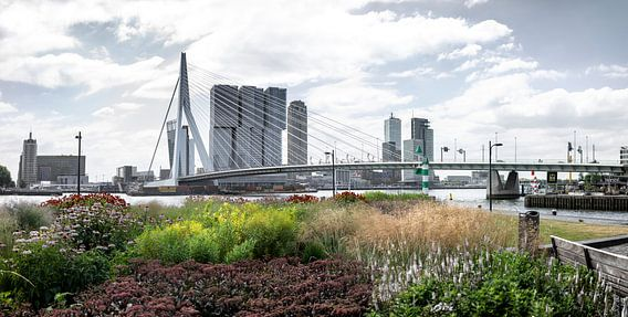 Wereldstad Rotterdam aan de maas in de zomer van Chez Michel