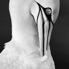 Soins du plumage gracieux sur Daniela Beyer