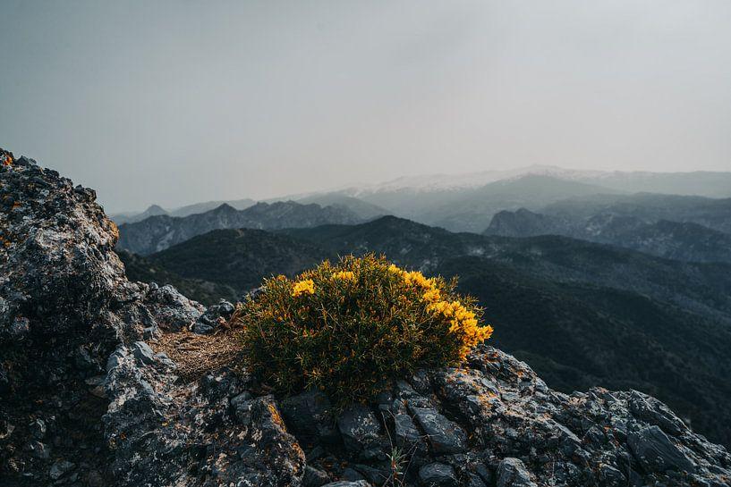 Mountain flowers van MDGshots
