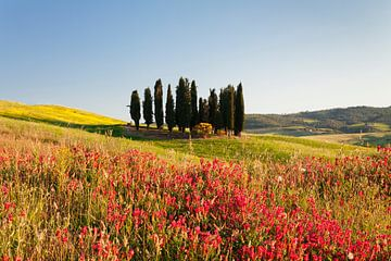 Toskanische Landschaft mit Zypressen, Toskana,  Italien von Markus Lange