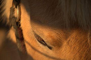 Paard van Sanne Willemsen