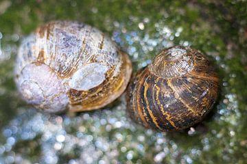 Couple d'escargots sur Helma Tielemans