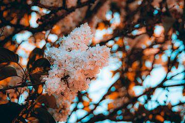 Goldstunde Blumen von Simen Crombez