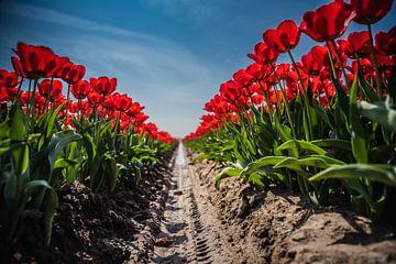 Tulpenveld van Anita Kabbedijk