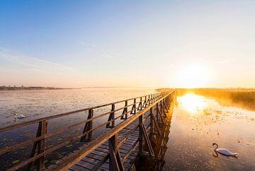 Lever de soleil au lac Federsee près de Bad Buchau sur