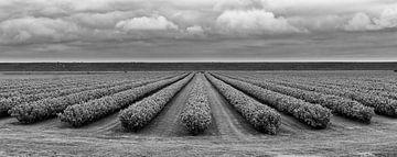 Dreigende wolken van Marcel van der Voet