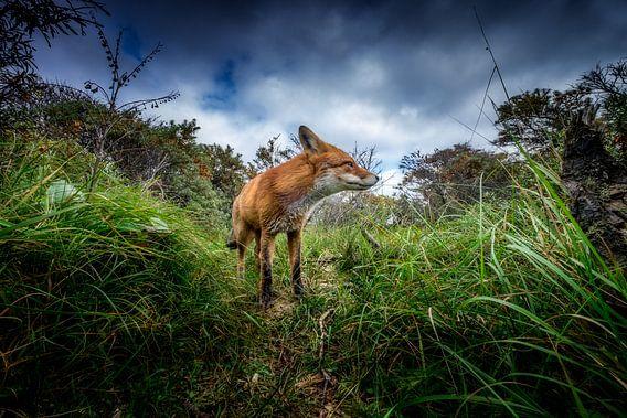 A fox trail van Ruud Peters