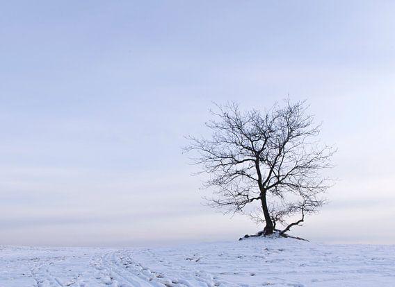 Boom in de sneeuw in het Nationaal Park De Loonse en Drunense duinen van Judith Spanbroek-van den Broek