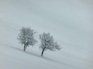 Bomen in sneeuw. van