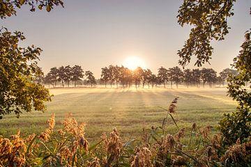 Doorkijkje op een mistige ochtend