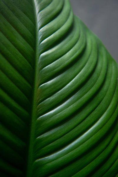 Groen blad van Ellis Peeters