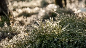 Bevroren gras van Marije Zuidweg