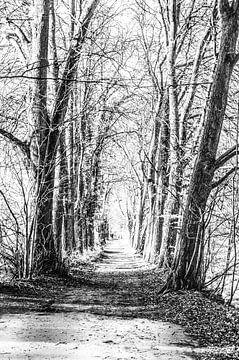 Promenade en forêt sur Norbert Sülzner