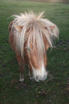 Pony, paard, horse,  van Yvonne de Waal Malefijt