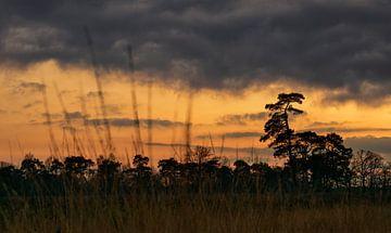 Natuur in Nederland - Strijbeekse heide
