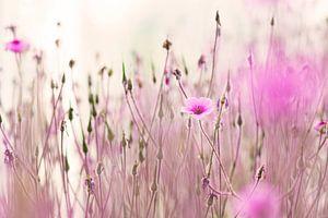 Bloemenveld van roze geranium