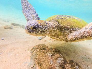 Schildpad in zee van Nicole Nagtegaal