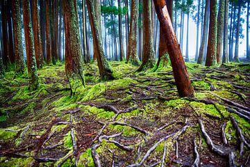 Fruchtbarer Boden von Maarten Coolen