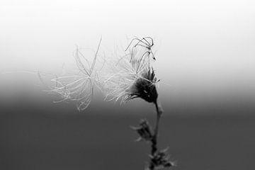 Summers Decay #1 van Floris Kok