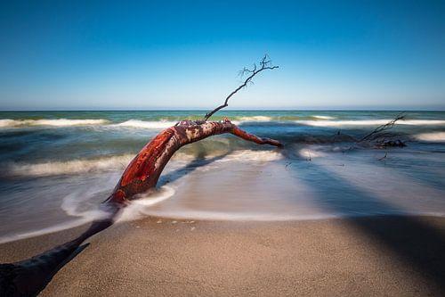 Trunk on the Baltic Sea coast