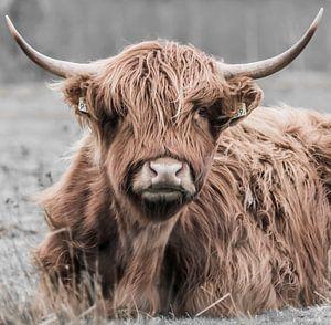 Porträt eines schottischen Hochlandbewohners