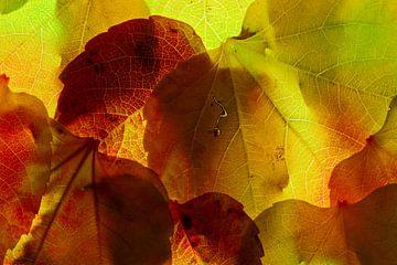 Herbstblätter 18 von Henk Leijen