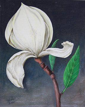 Magnolie sur Gertrud Scheffler