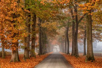 Laan in de herfst sur Elroy Spelbos