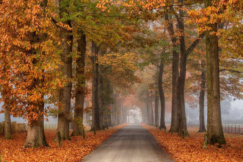 Laan in de herfst van Elroy Spelbos