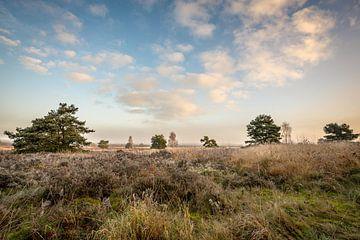 Een prachtig uitzicht op de winderhei van Peter de Jong