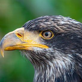 De machtige adelaar. van Natascha Worseling