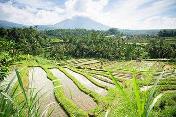 Rijstvelden van Jatiluwih Bali Indonesië van Esther Mennen