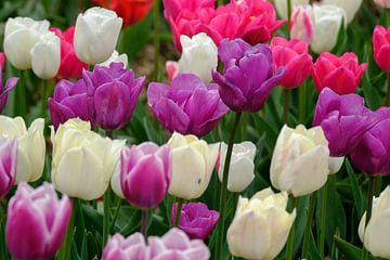 Kleurige tulpen van Joke Beers-Blom
