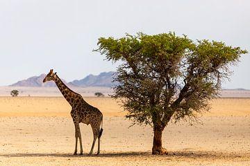 Giraffe in der Nähe eines Baumes von Jeroen de Weerd