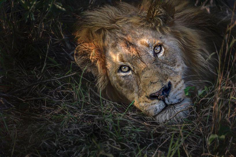 Jungle King awake van Laura Sanchez