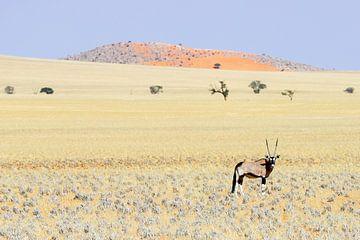 Die Weite der Namib von Britta Kärcher