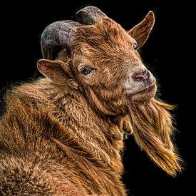 Portrait d'un bouc brun avec une barbichette sur Harrie Muis