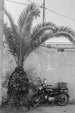 Motorfiets en palmboom in Marokko van Bianca Kramer