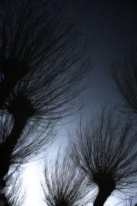 Weerspiegling van Hollandse wilgen in het water. One2expose Wout Kok Photography
