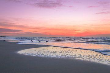 Seagulls and sunset at Noordwijk beach sur Richard Steenvoorden