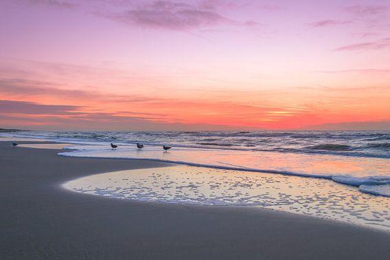 Meeuwen en zonsondergang in Noordwijk van Richard Steenvoorden