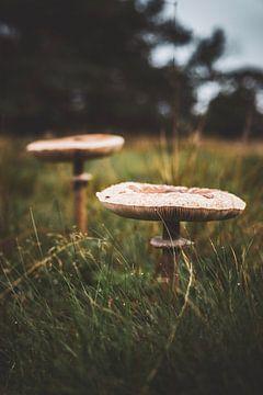 Pilze von S van Wezep