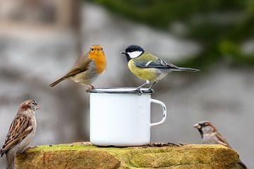 Drie vogels die op de rand van een metalen beker zitten voor een vage achtergrond van Hans-Jürgen Janda