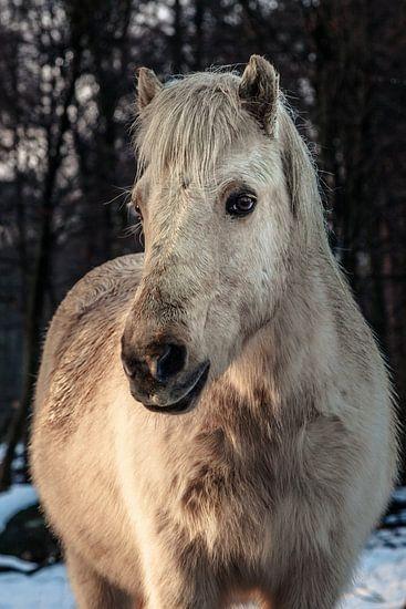 Portret van een paard van Tim Abeln