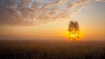 De boom in de mist.