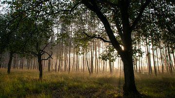 Goldene Herbstpause im Wald von Saskia Pasman