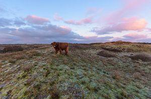 Le Highlander écossais au sommet d'une dune au lever du soleil