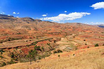 Madagaskar in de zomer von Dennis van de Water