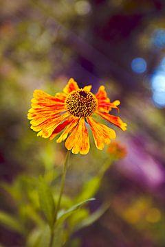 Flower 2013 von Jolien Somers